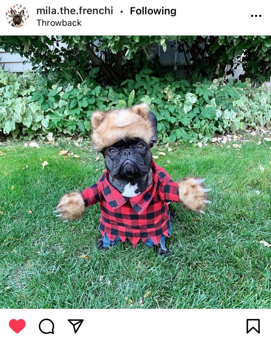 Werewolf Halloween Costume Ideas For Dogs