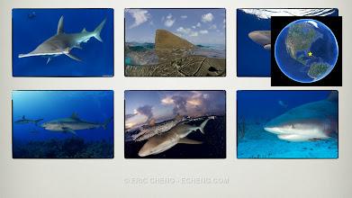 Photo: Big sharks: Bahamas