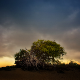 Silent Morning by Sihina Lahiru - Landscapes Travel ( sky, sunrise, abstract art, shadow, tree, abstract, clouds, skyline, sun, sea, summer, seascape, sri lanka, abandoned )