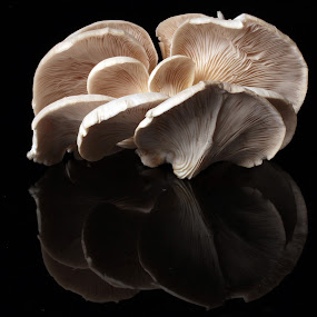 Zetas by Cristobal Garciaferro Rubio - Digital Art Abstract ( mushroom, reflection, zetas, white, reflections, white zetas )