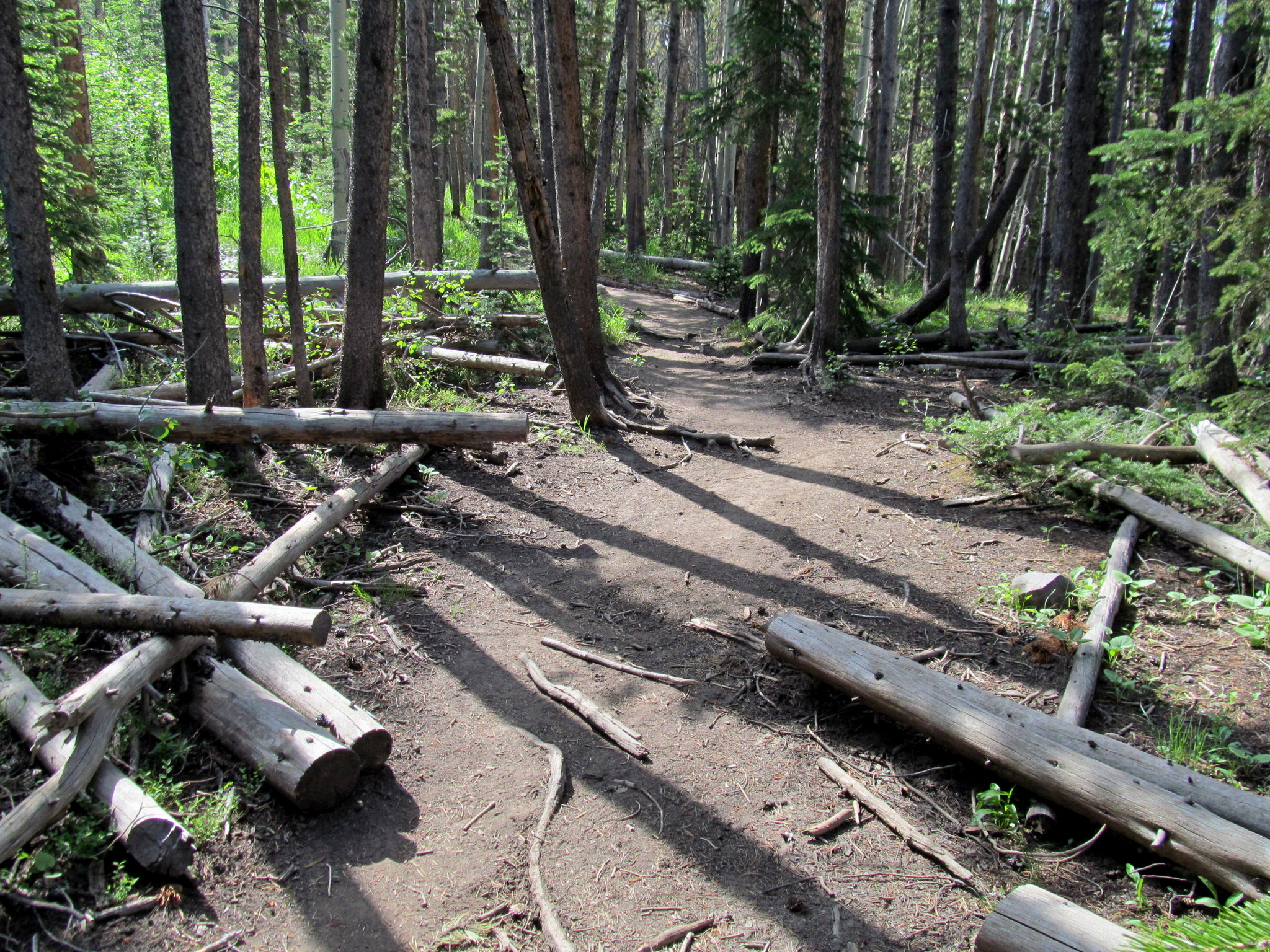 Photo: Many fallen trees that have been cleared