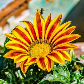 by Mohsin Raza - Flowers Flower Buds