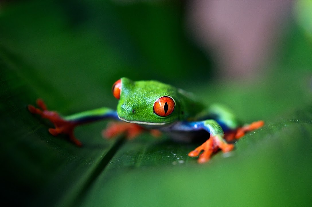 Costa Rica Básica