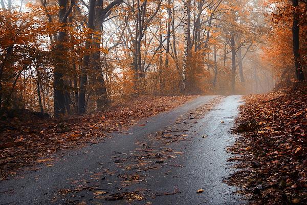 November road di Barbara Surimi