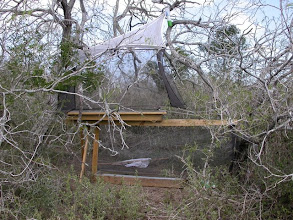 Photo: F.I.T. trap in south Texas brush