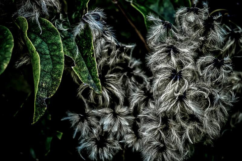Fiori d'autunno di Pier Gatti photography