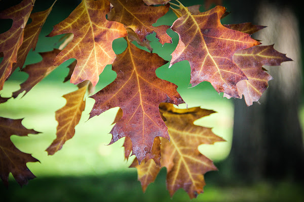 Autumn di Simona Ranieri