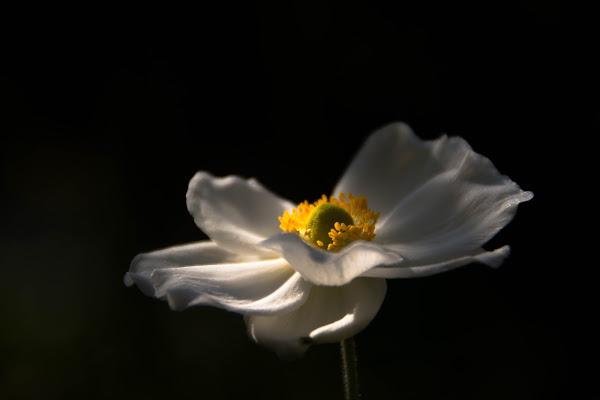La leggerezza di un fiore... di vaiolet