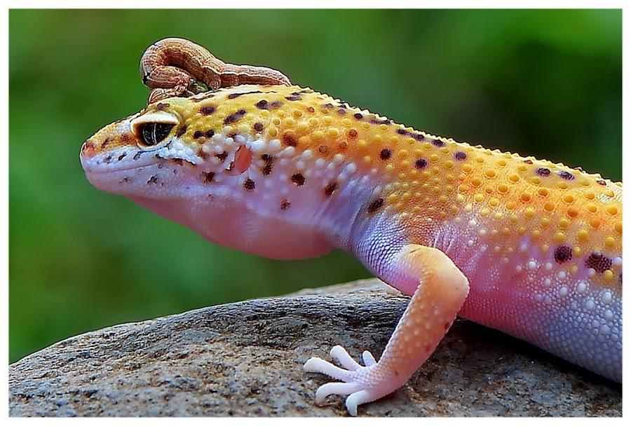 by Edah DJ-phonks - Animals Reptiles