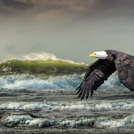 The Sea by Jerry Cahill - Animals Birds