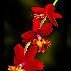 Epi Joseph Glow x Epi Chrystal Valley by Joseph Vittek - Flowers Flowers in the Wild ( green, hawaii, yellow, red, tropical, gold, white, plant, valley, joseph, chrystal, orchid, glow, epidendrum,  )