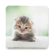 Kitten Sound Collections ~ Sclip.app