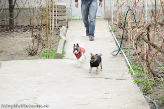 Photo: Luca si surioara lui, Lola, sunt cazati temporar in Bucuresti si inca primesc tratament pentru raceala. Si pentru ca s-a facut frig, acum ies afara doar imbracati :)