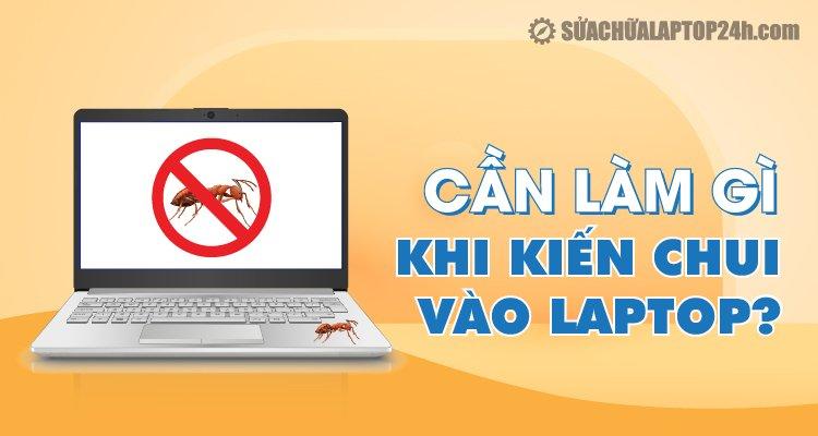 Cần làm gì khi kiến chui vào laptop?