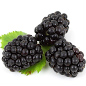 Blackberry Wallpapers icon