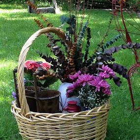 Basket of flowers  by Debra Rebro - Flowers Flower Arangements (  )