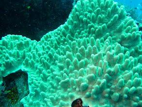 Photo: #012-Plongée à Poindimié