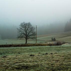misty by Lucija Janša - Novices Only Landscapes ( green, road, gray, landscape, mist )
