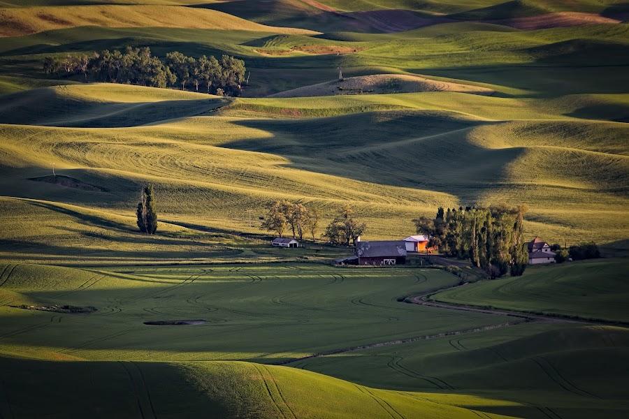 Palouse Farm by Scott Wood - Landscapes Prairies, Meadows & Fields ( field, farm, washington, palouse, nxnw2015, shadow, sunset, green, trees, nxnw, sunrise, expeditionpalouse,  )