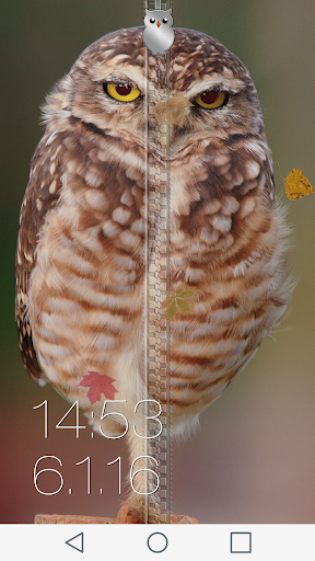 Owl Zipper Lock Screen