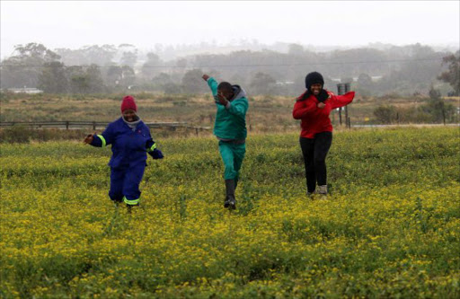 FEELS SO GOOD: Fort Cox Agri College students Phindani Nomaphelo, Mlanjeni Asithandile and Asisipho Maseti revel in the recent rains on a farm near East London Picture: MICHEL PINYANA