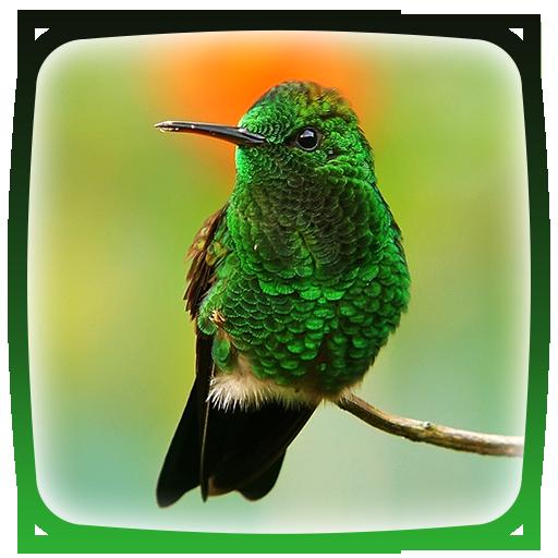 Hummingbird Live Wallpaper