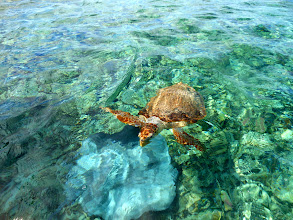Photo: Turtle and Ray near Caye Caulker