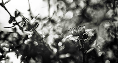Photo: #bwphotography  #flowers