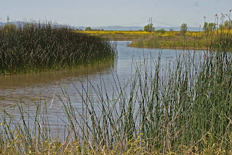 Photo: City of Davis Wetlands
