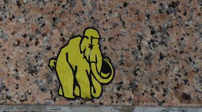 Photo: MaJo Brothers; Mighty Mammut