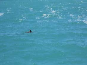 Photo: Un delfín...