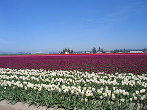 Photo: Skagit Valley