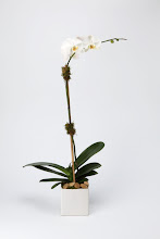 Photo: White Orchid Plant