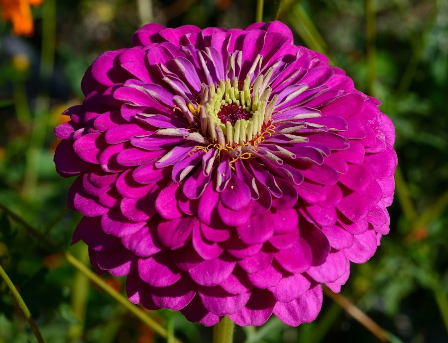 by Vladymyr Sergeev - Flowers Single Flower