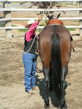 Photo: I am preparing to toss the lariat loop, to ultimately place the loop around Tilly's left-hind foot.