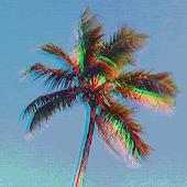 Palm Tree Live Wallpaper Free