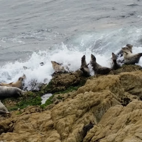 A Splash Of Water, On The Rocks, Please by Tameem Sanjar - Animals Sea Creatures (  )