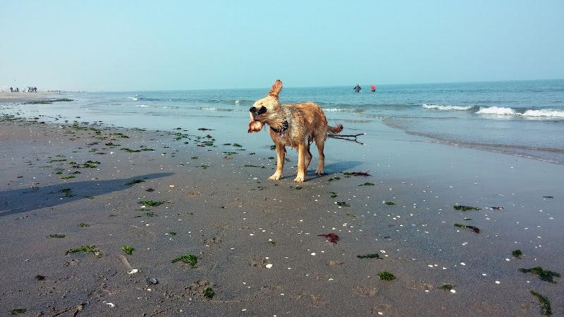 Gilda al mare di JoJo79
