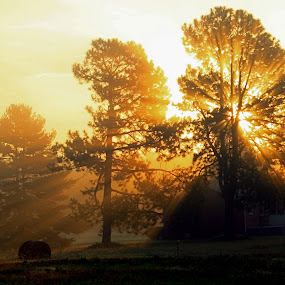 by Karen Harrison - Landscapes Prairies, Meadows & Fields (  )