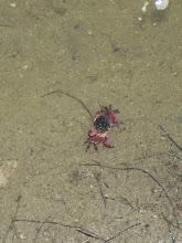 Photo: Crabs everywhere