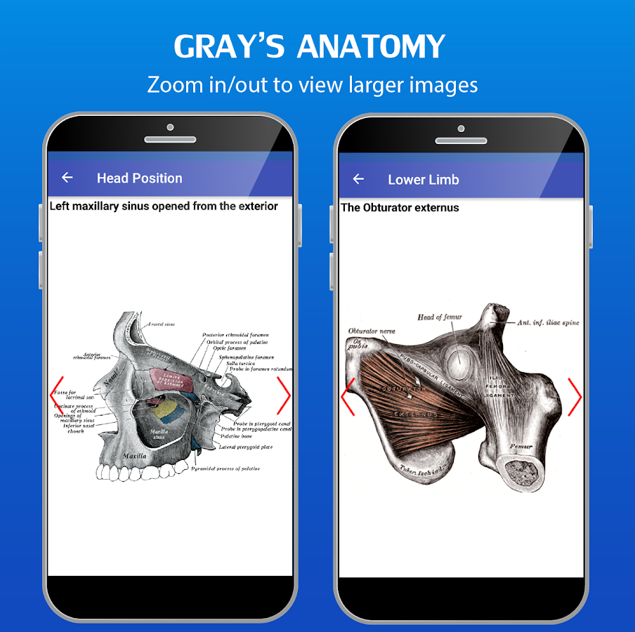 Gray's Anatomy - Atlas- screenshot