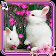 Funny Bunnies live wallpaper apk
