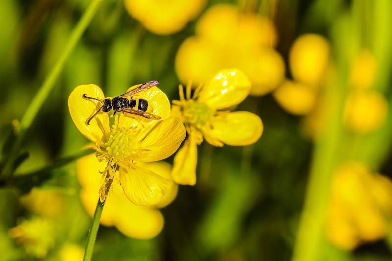 Bee on a flower di giulinda