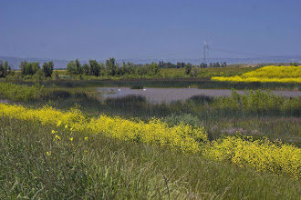 Photo: Lower Willow Slough Canal