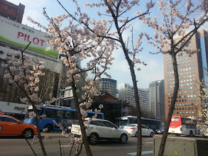 Photo: Cherry Blossoms!