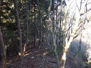 植林の尾根となる