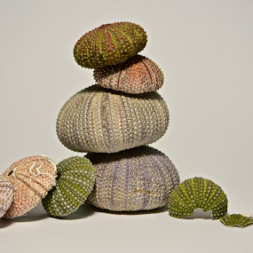 all of them by Anisja Rossi-Ungaro - Artistic Objects Still Life ( broken, shells, see, white background, colours )