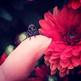 by Melissa Bieri - Instagram & Mobile iPhone (  )