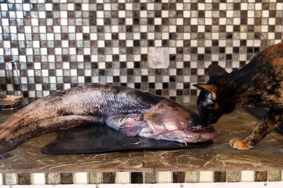 Астраханский сом и кулинарное фиаско