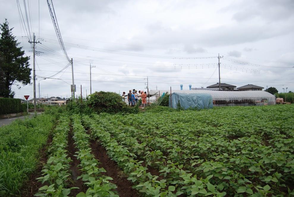 手前が大豆。奥に草堆肥山。